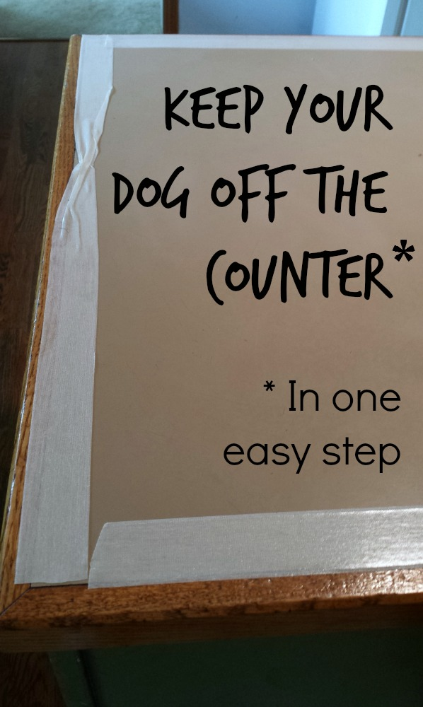 Keep your dog off the counter in one easy step