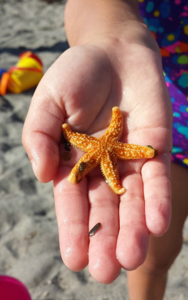 edmonds beach baby starfish